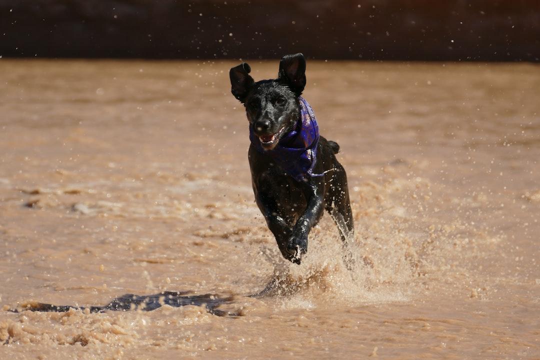 @adventure.yuki splash run