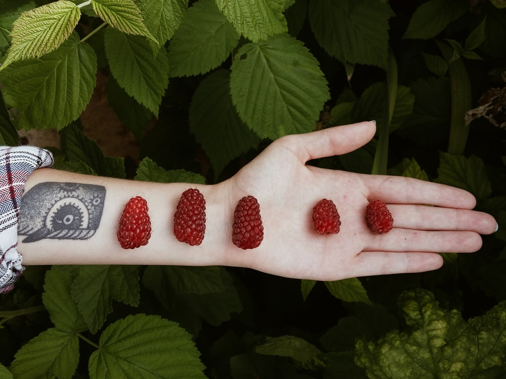red fruits on person hand