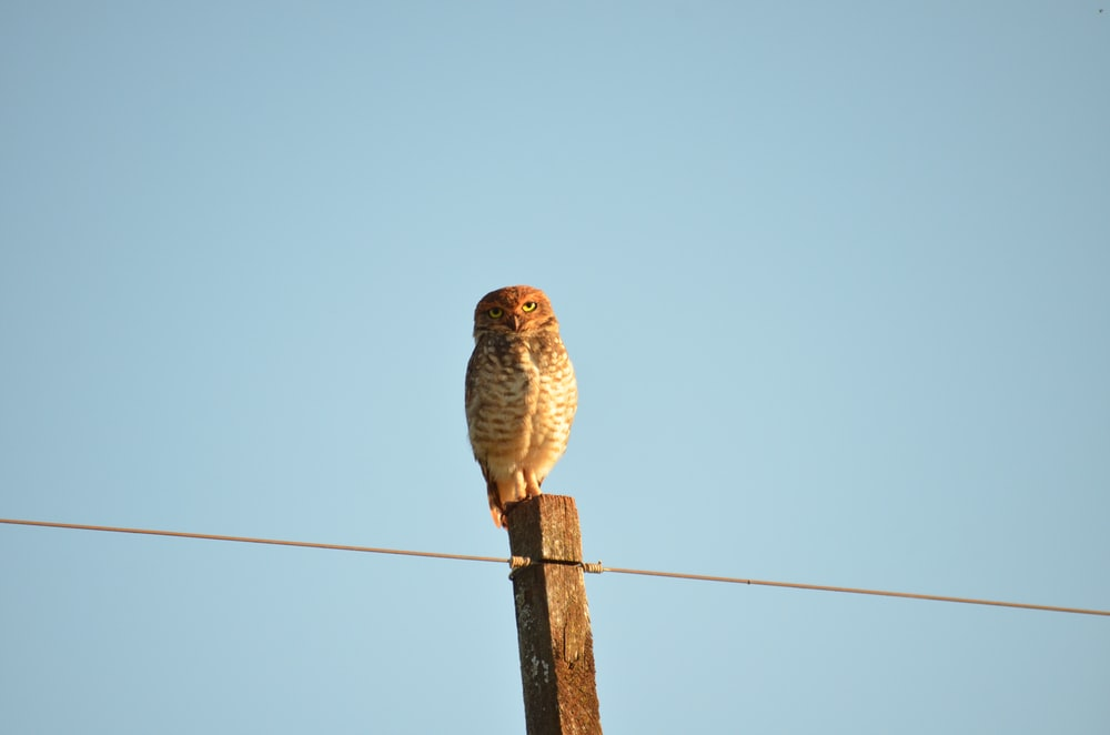 gray owl perching on brown post under blue sky during daytime