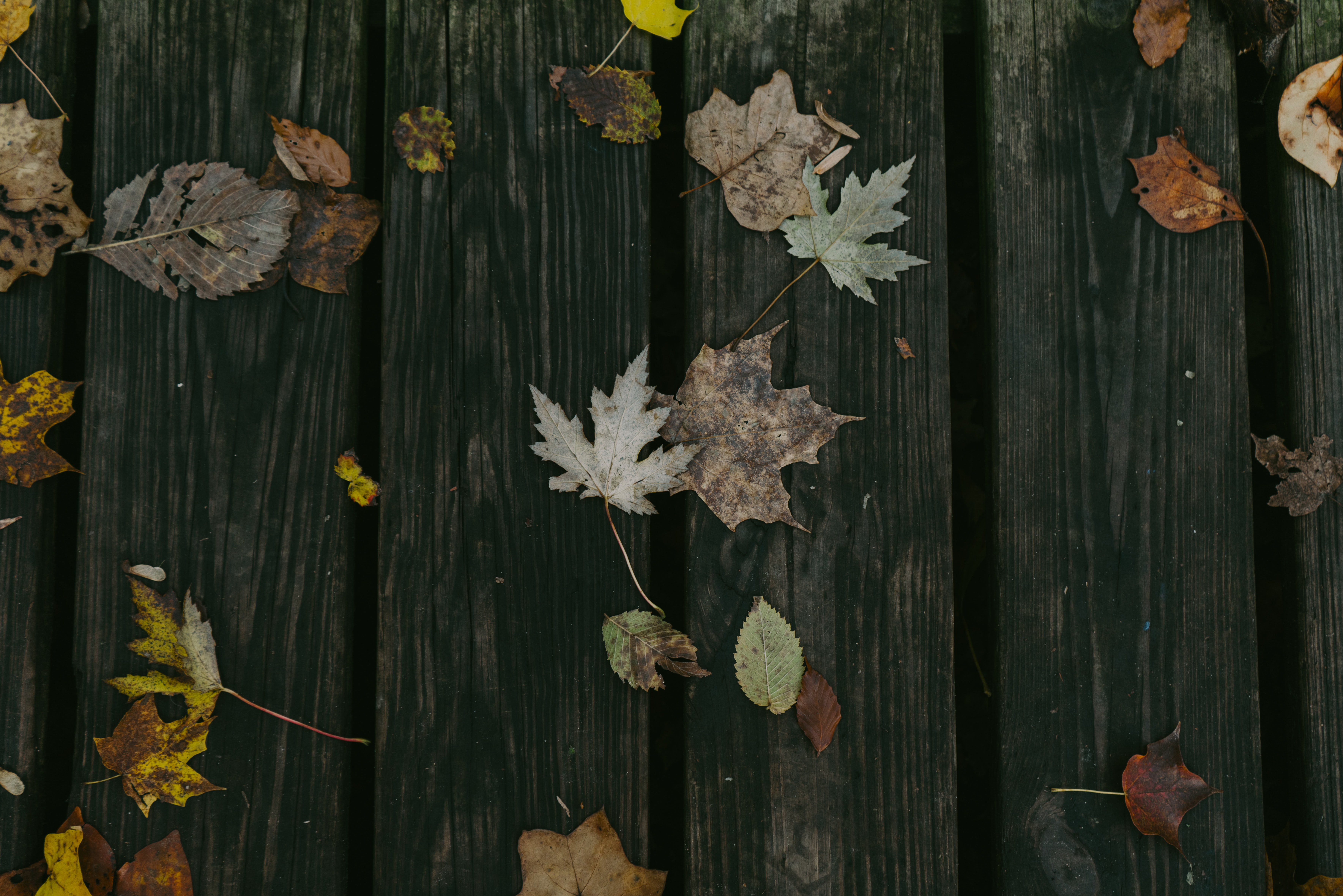 maple leaves on brown wooden board