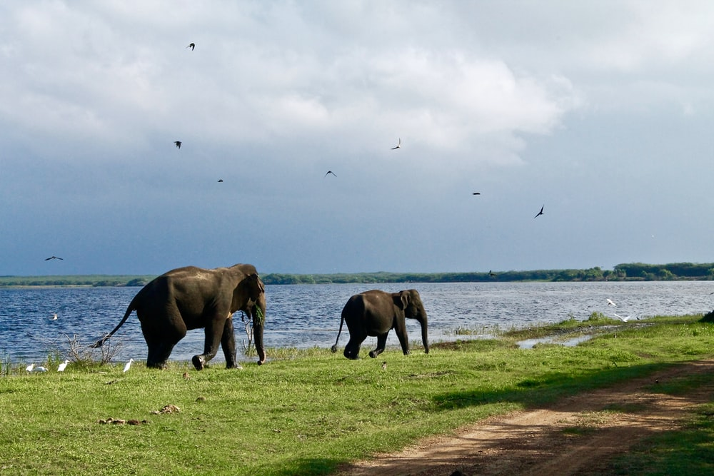 two elephants walking beside body of water during daytime
