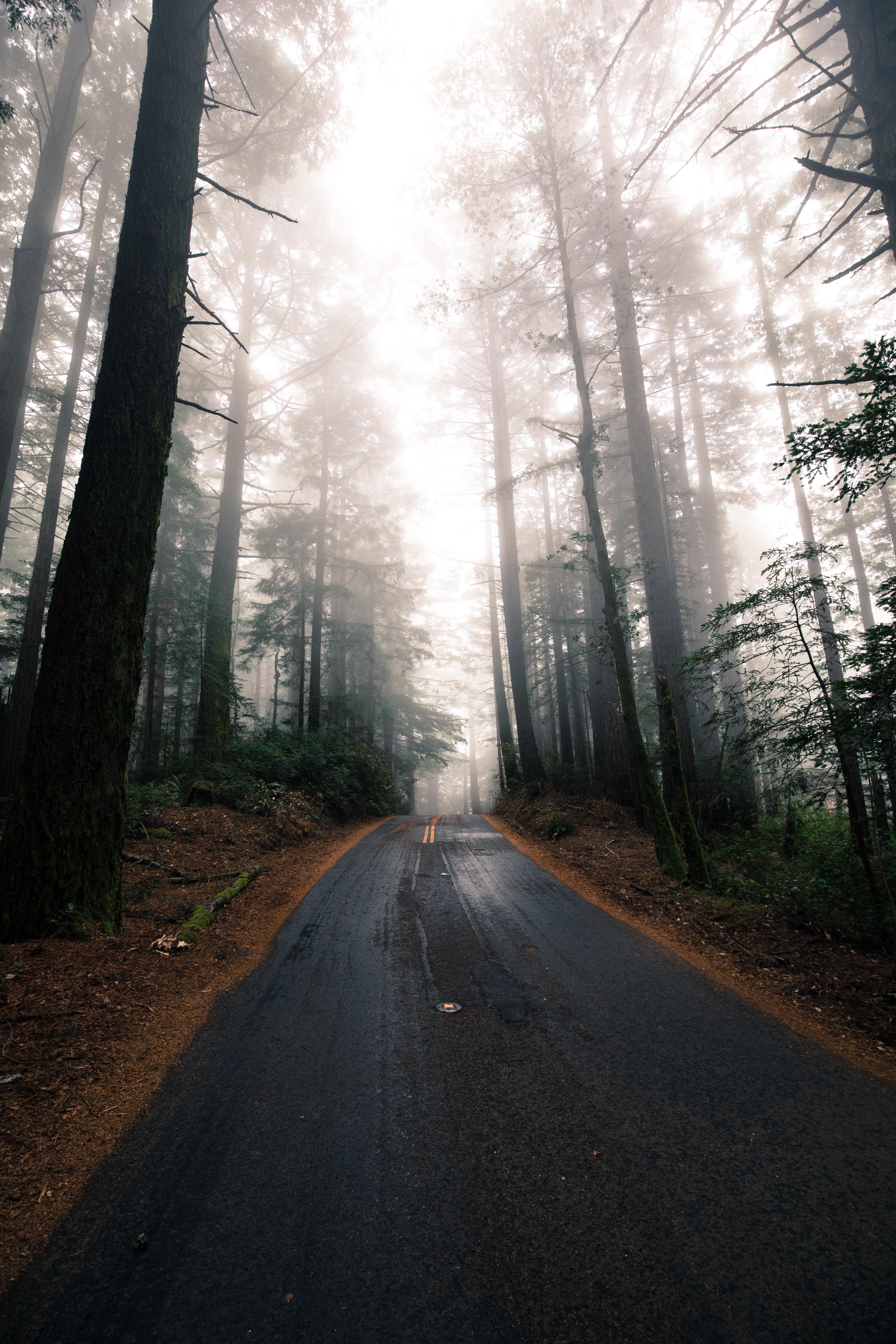 gray asphalt between green trees