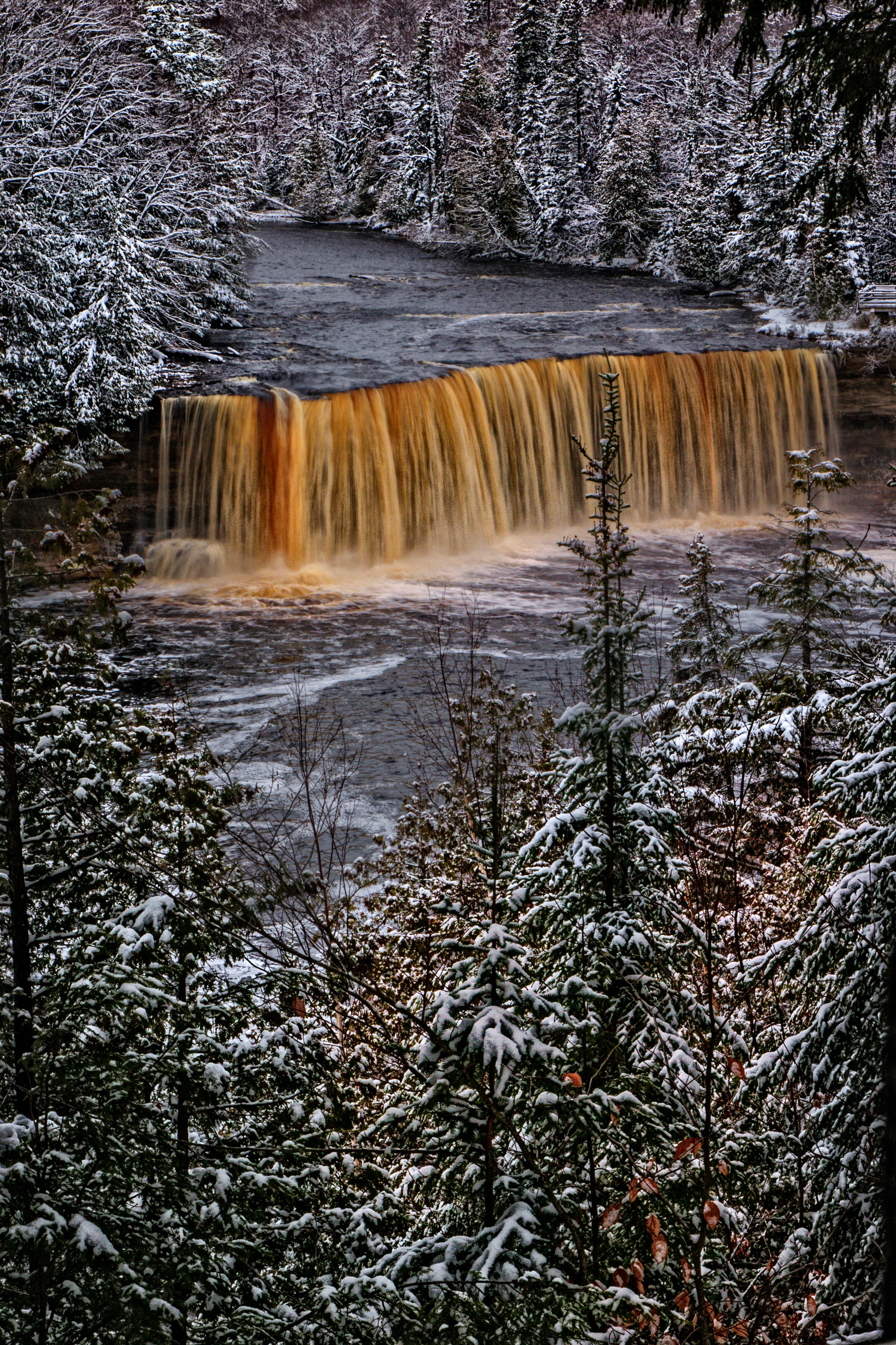 selective color photo of waterfalls surrounded with pine trees