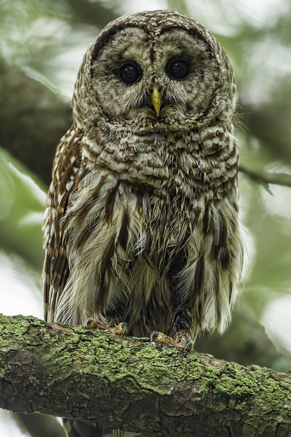 focus photo of brown and white owl