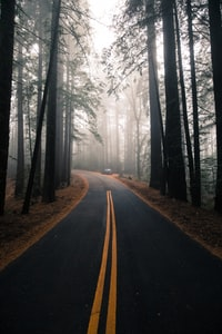 asphalt road surrounded with trees