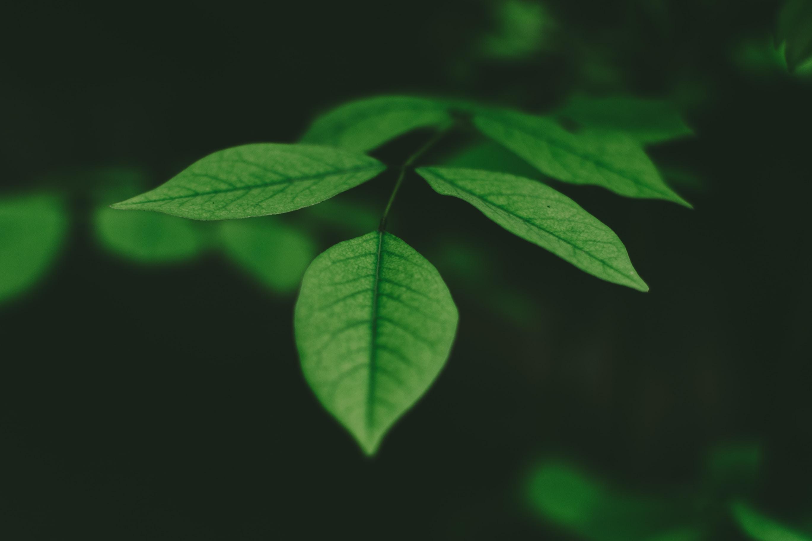 Poem: Evergreen encouragement stories