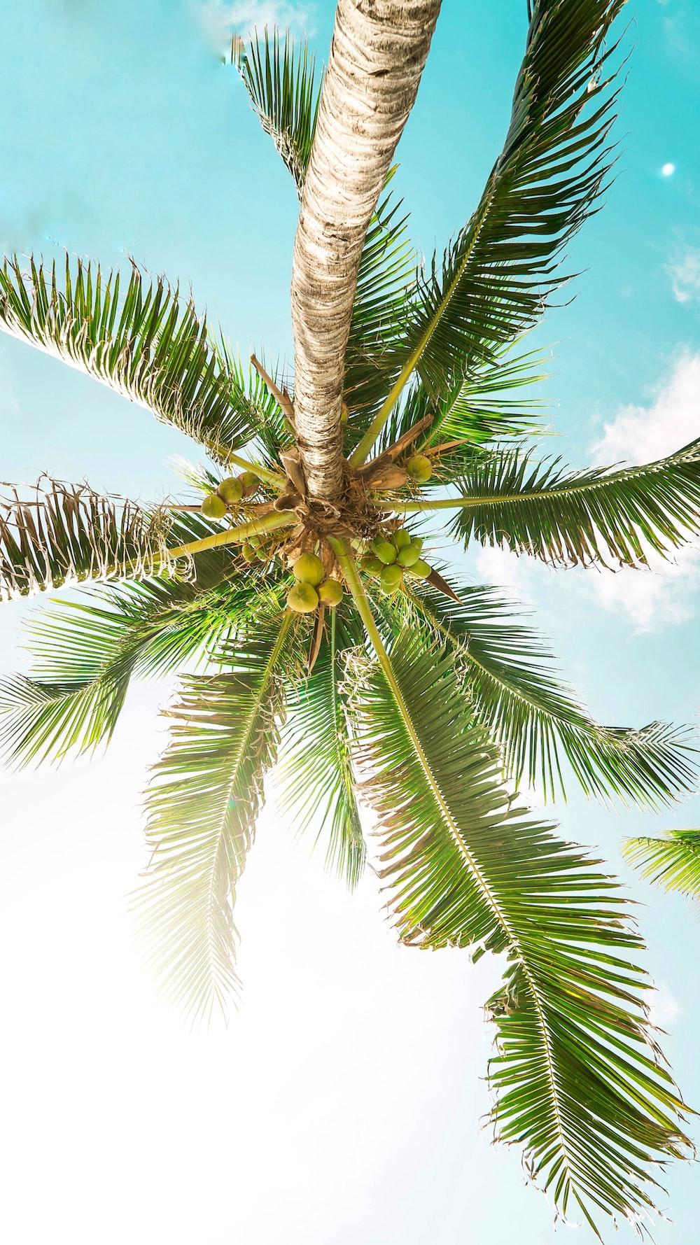 bottom photography green coconut tree