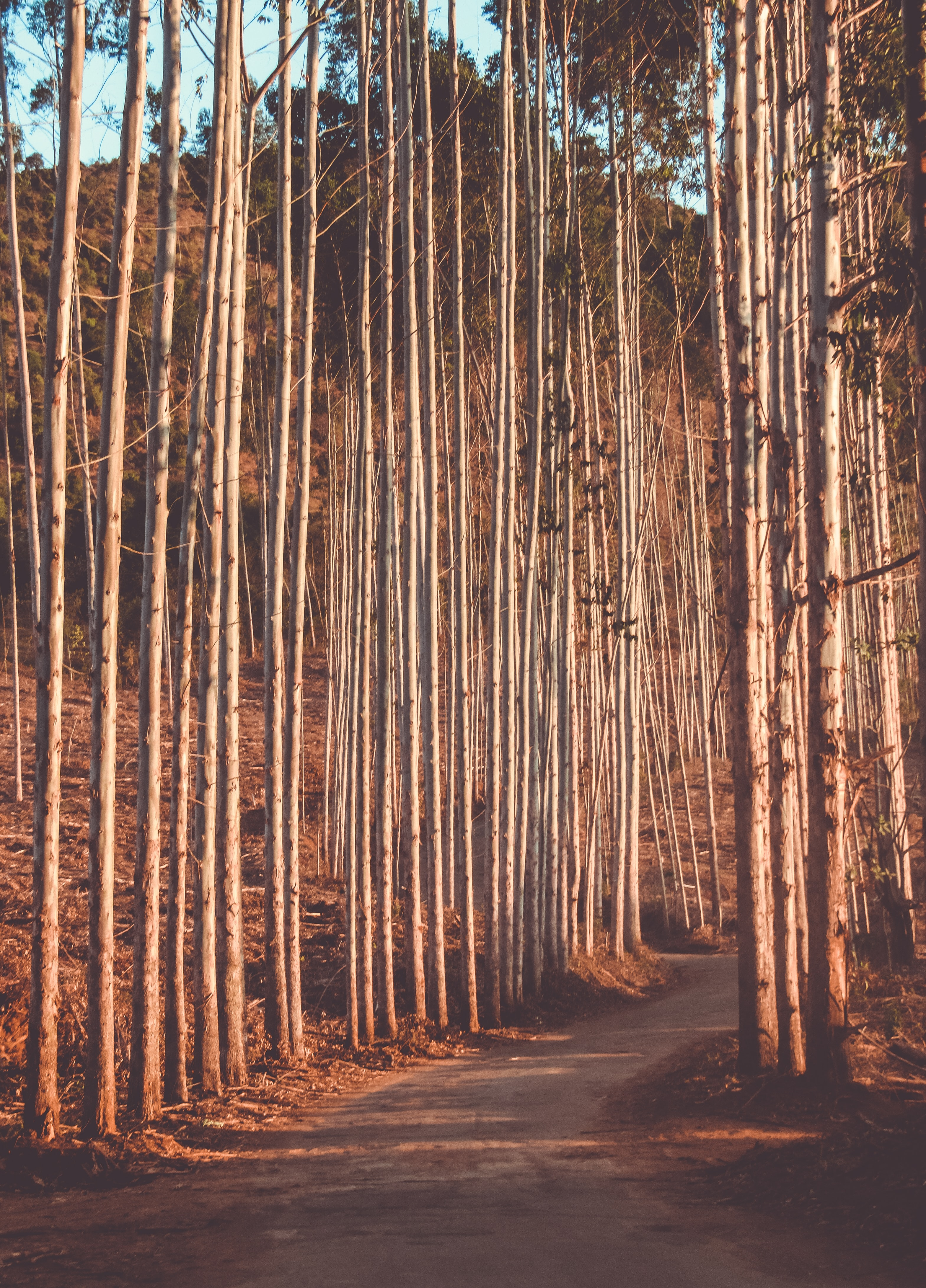pathway between tall trees during daytime