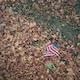 USA flag on brown leaves