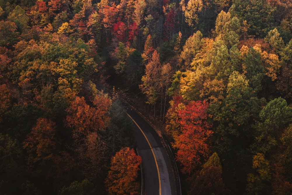 aerial photography of trees and road