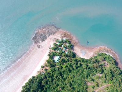 aerial photography of trees and beach guinea zoom background