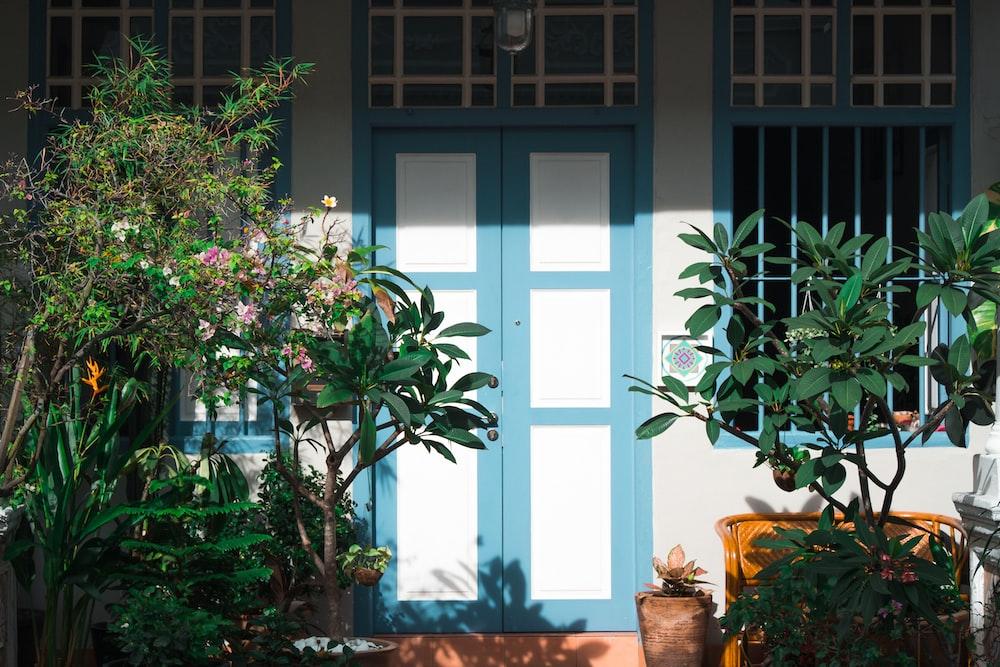 plants near closed house door