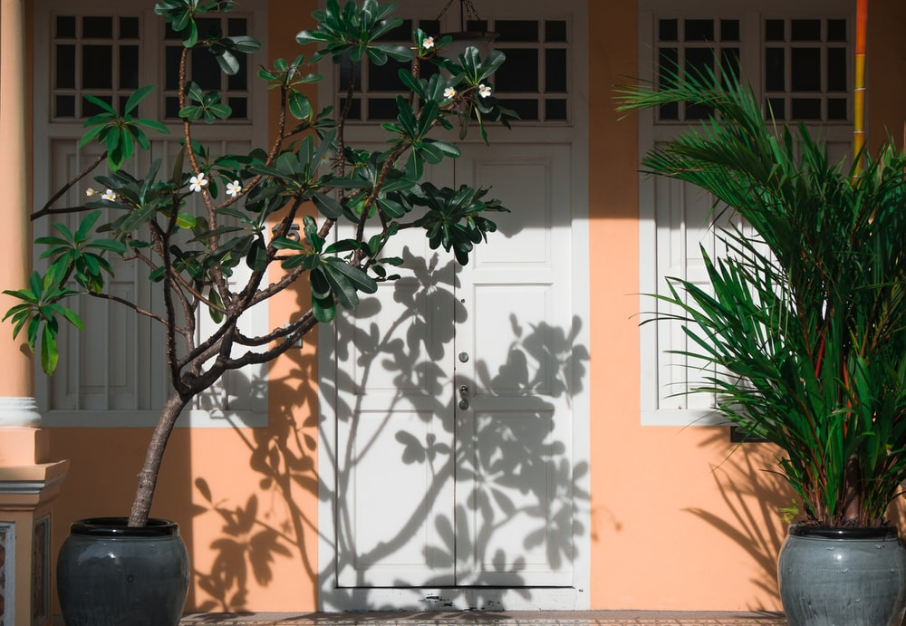 two potted plants near closed d oors