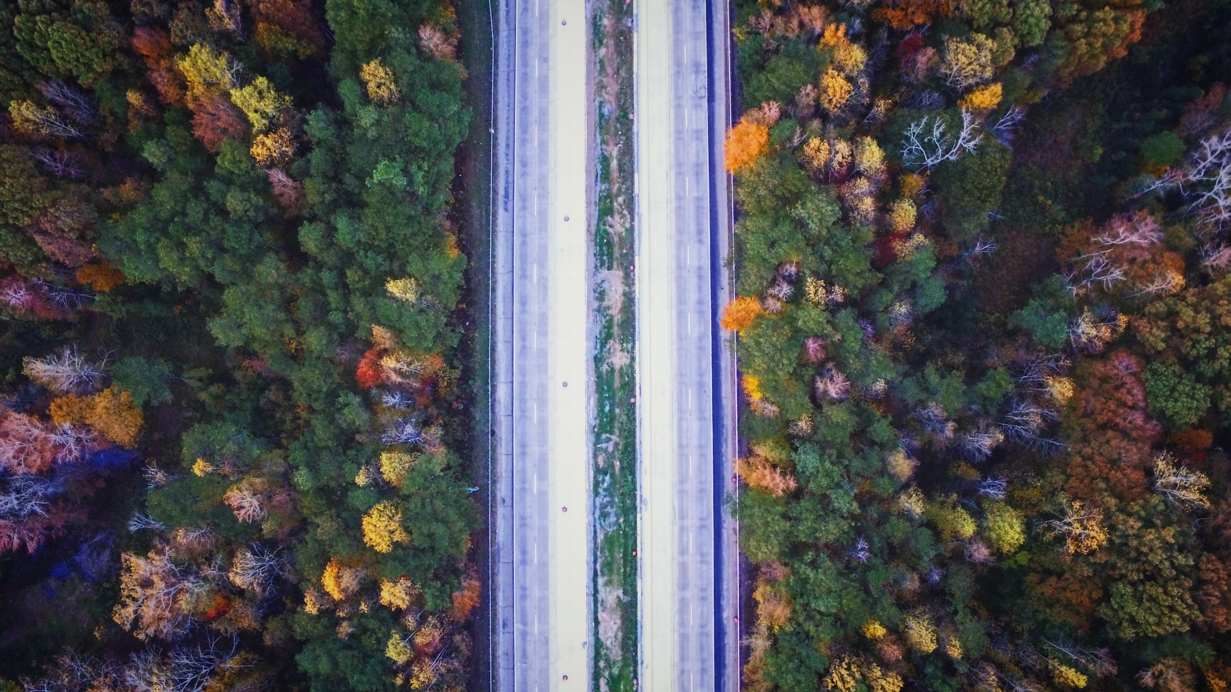 aerial photography of road between trees at daytime