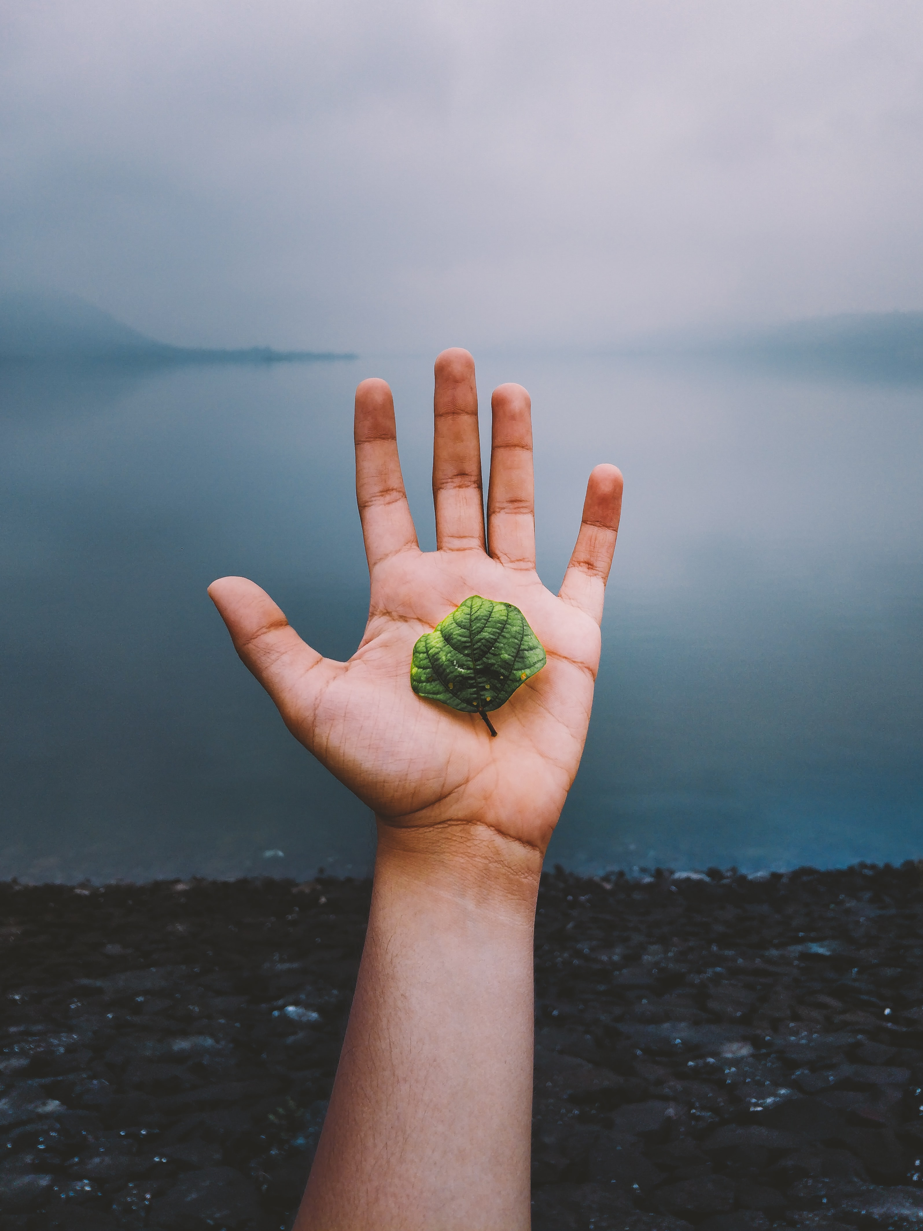 person holding plant leaf
