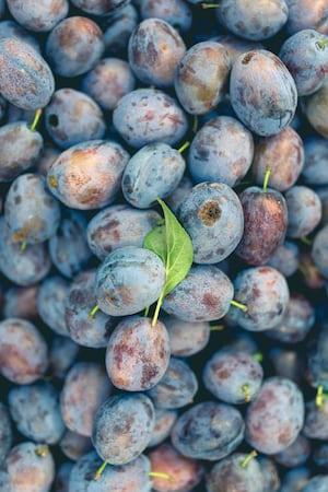4643. Bor,szőlő, borászatok
