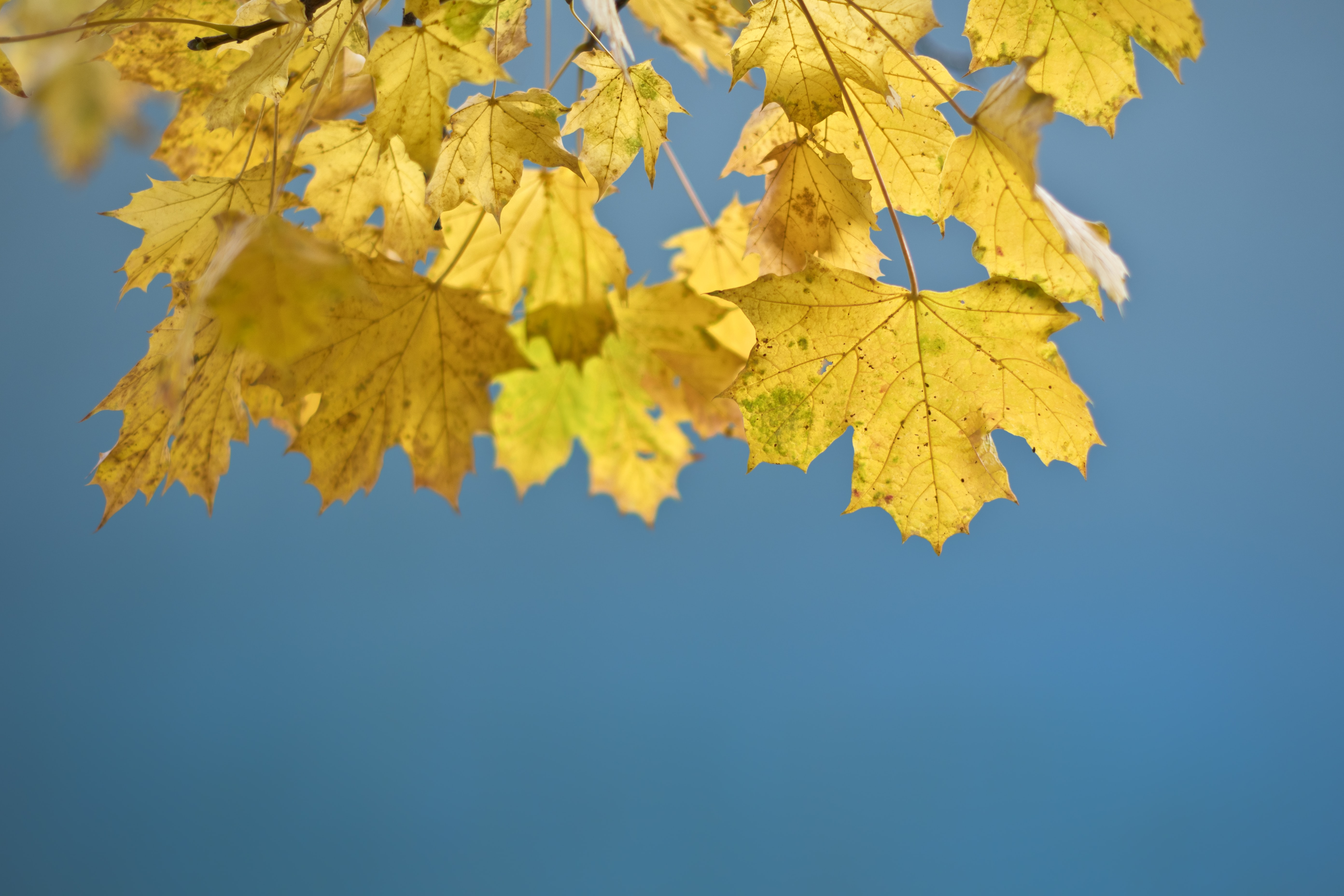 selective focus photography of yellow leaves