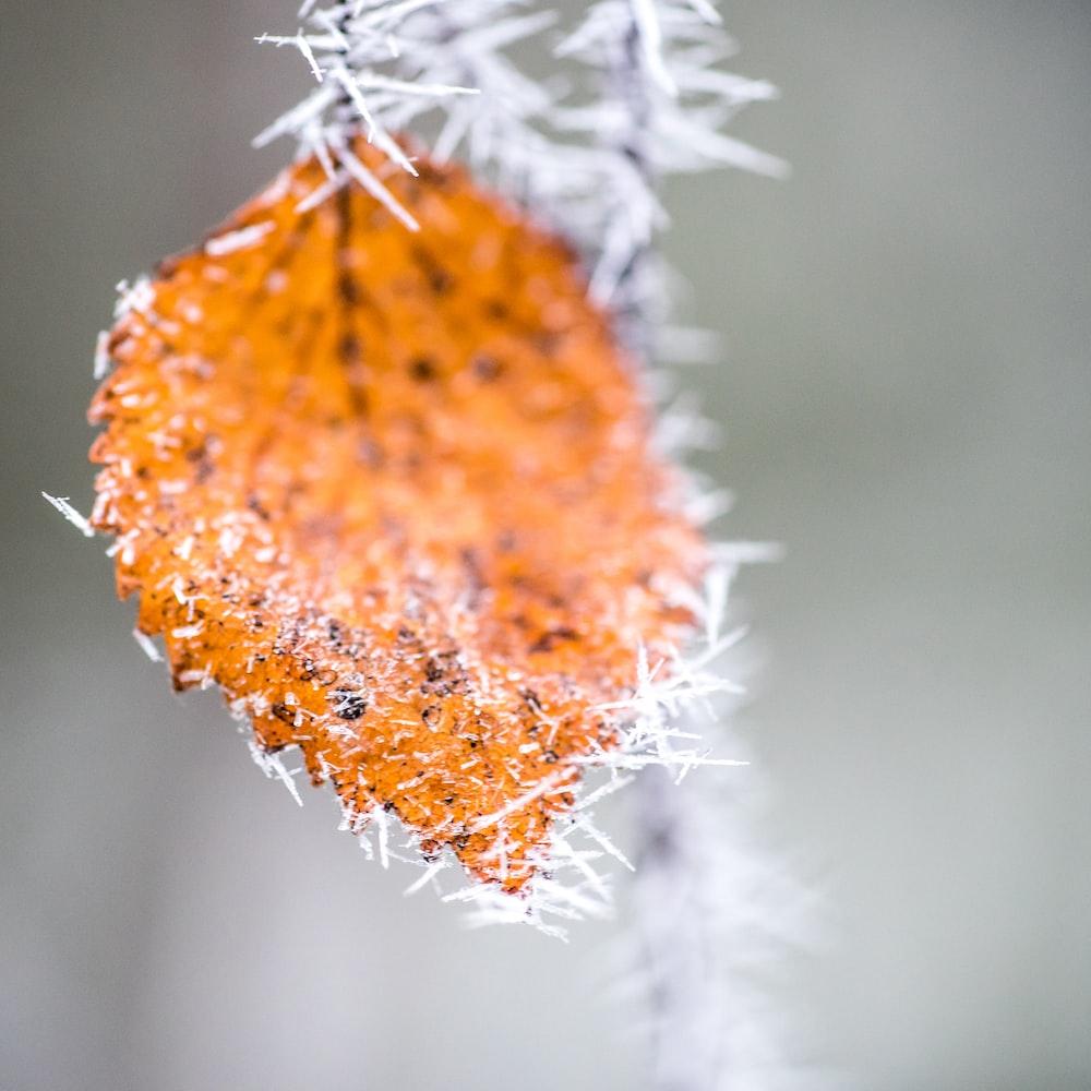 closeup photography of orange leaf