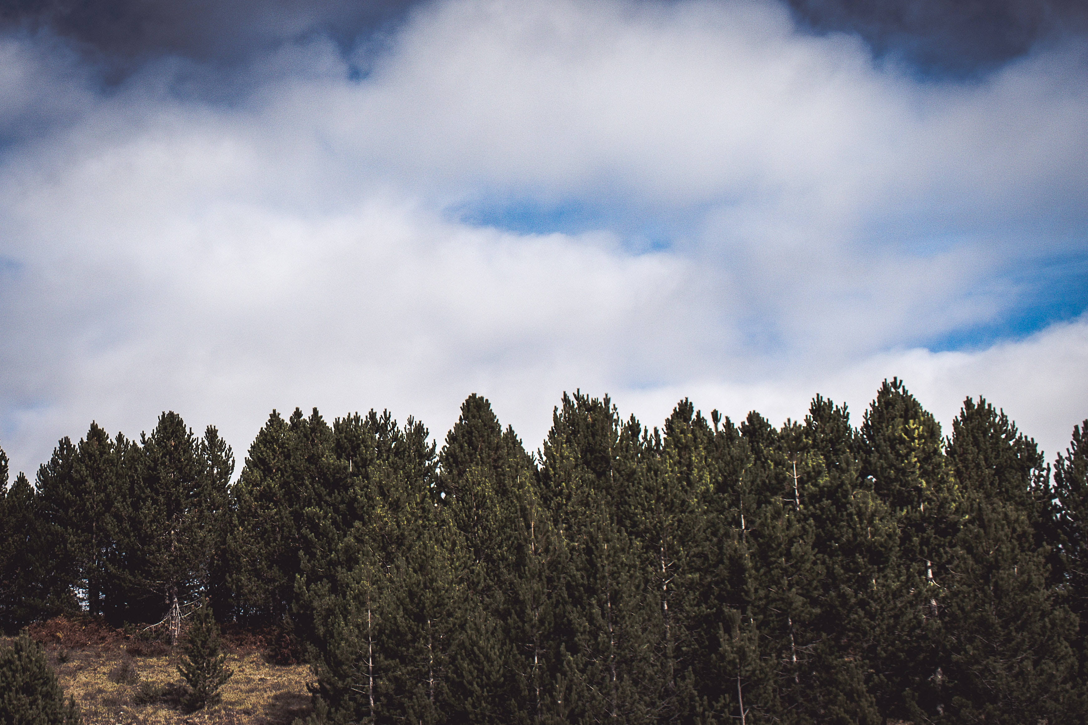 green leafed trees under cloudy sky during daytime