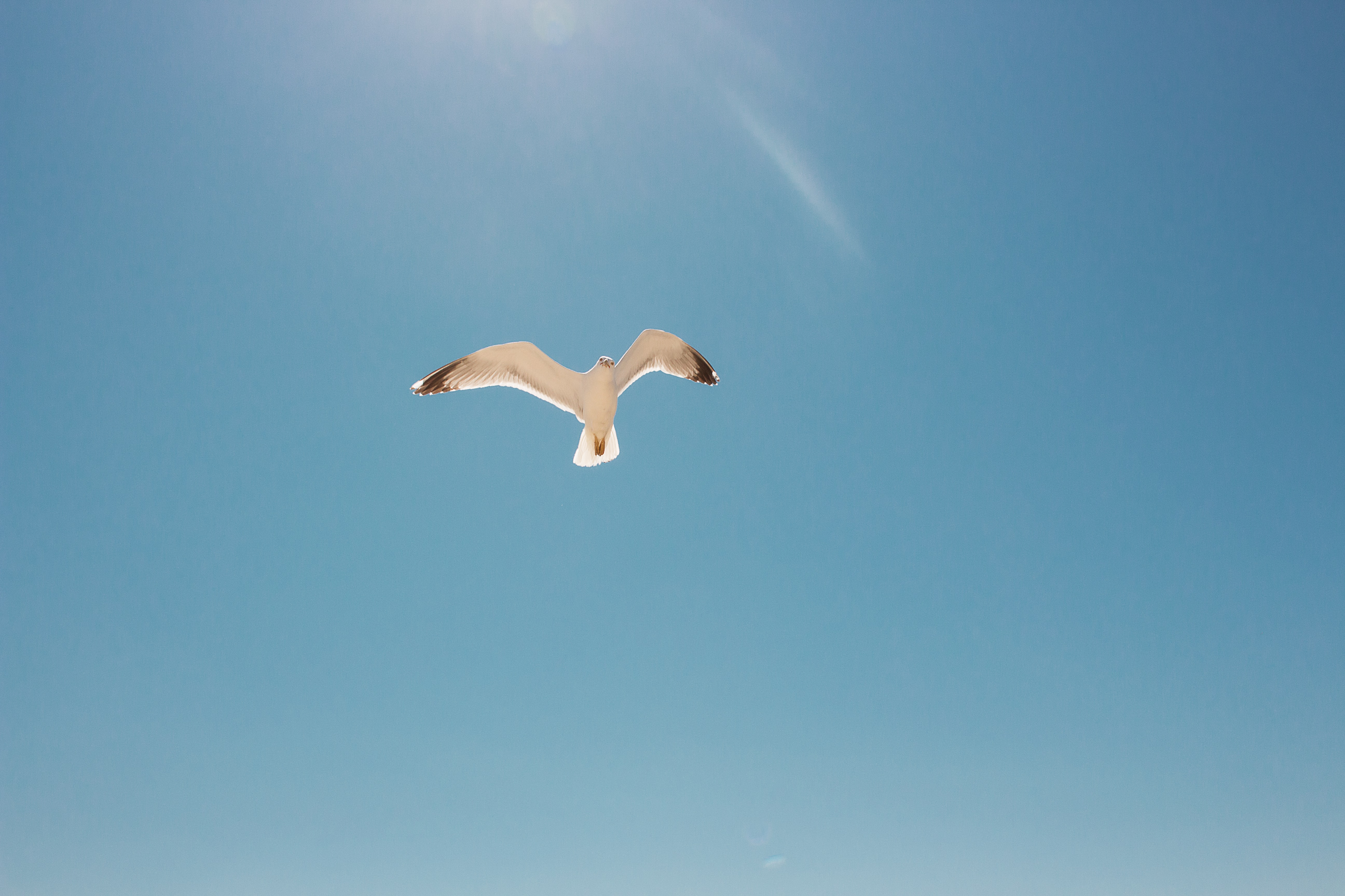 white and black seagull flying in the skies