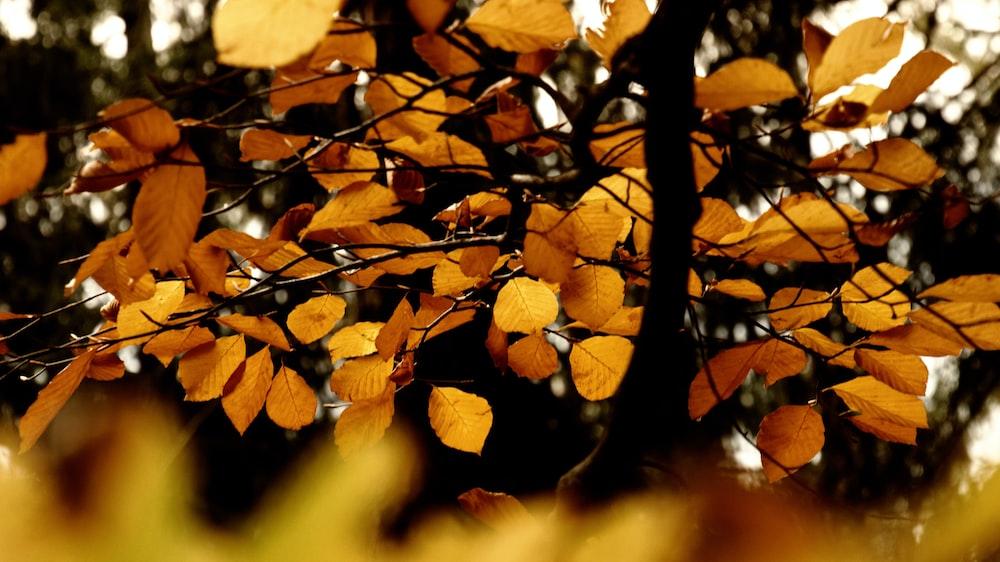 macro shot of brown leaves