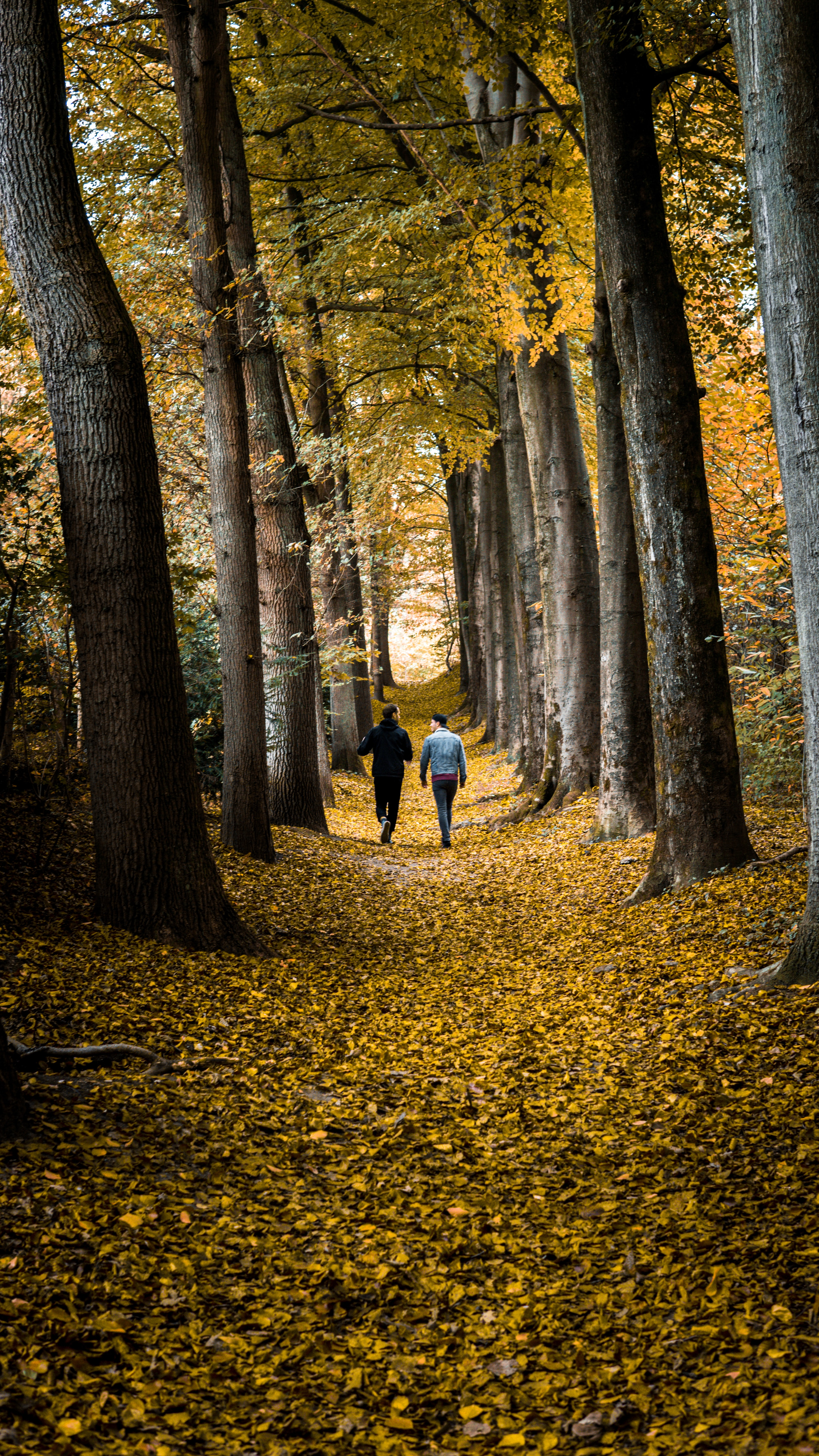 two men walking in the middle of forest