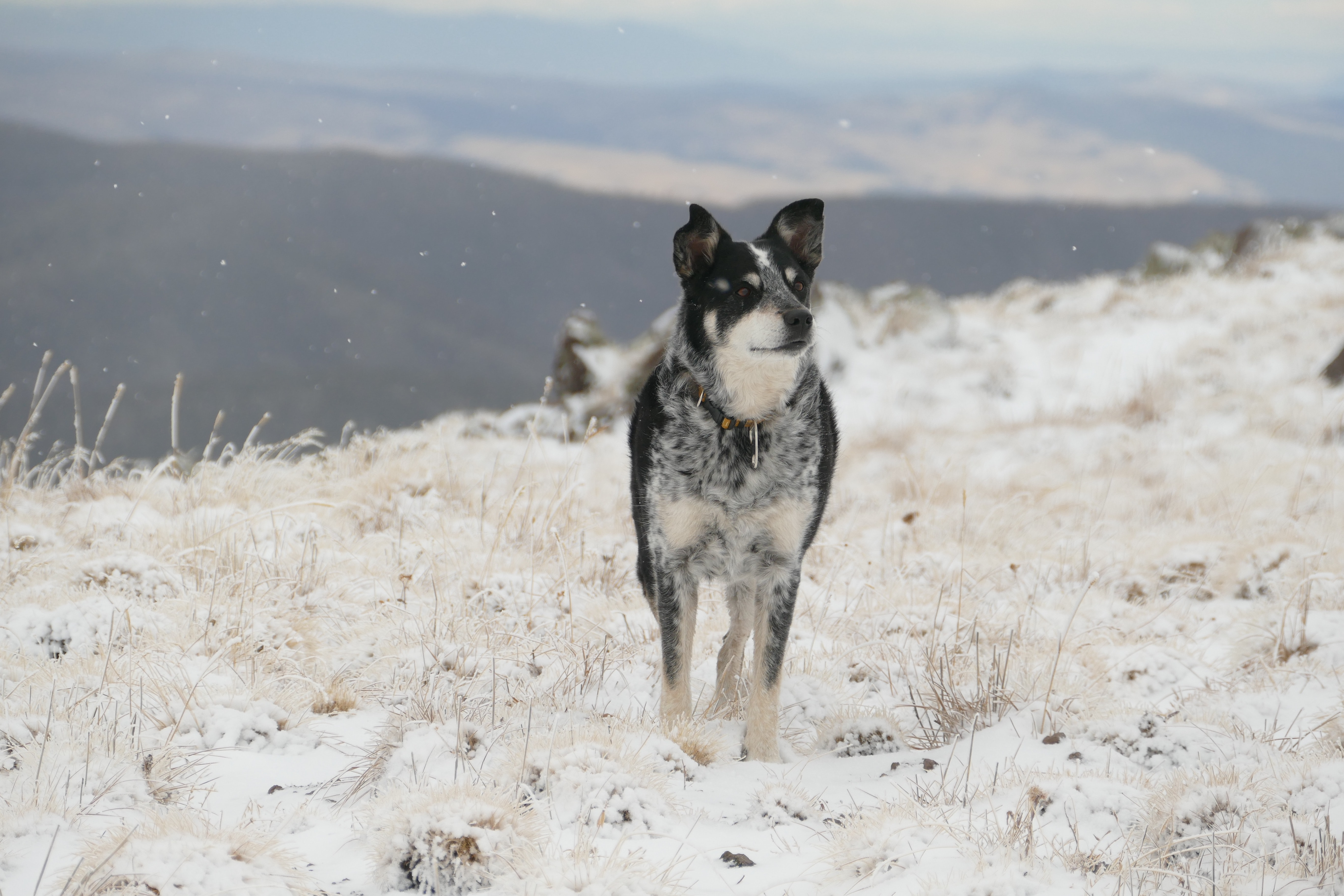 dog standing on snow cover field
