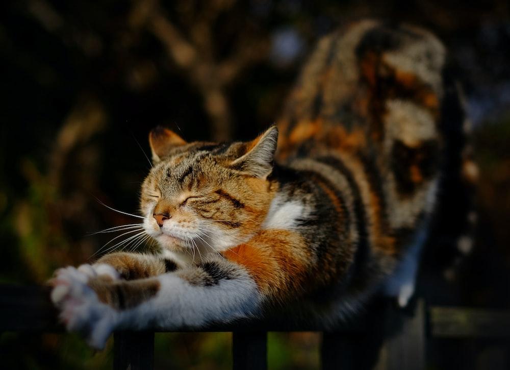 orange tabby cat stretching position on railing