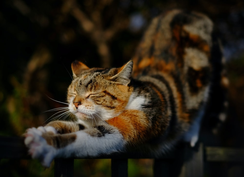 orange tabby cat stretching position on railing