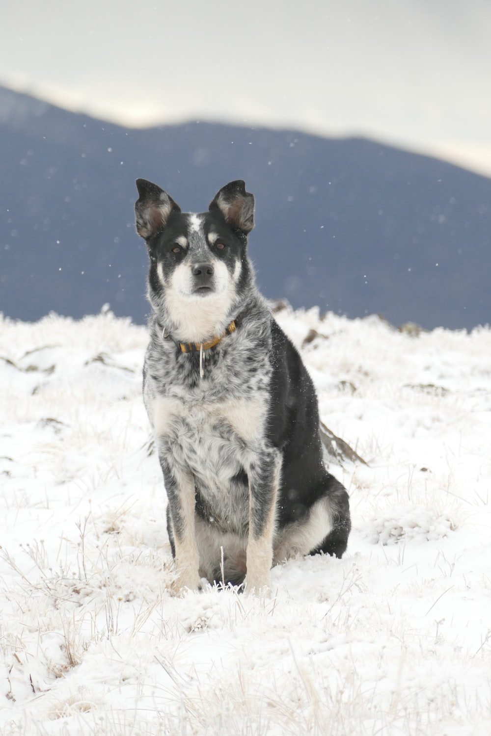 dog sitting down on snow-covered field