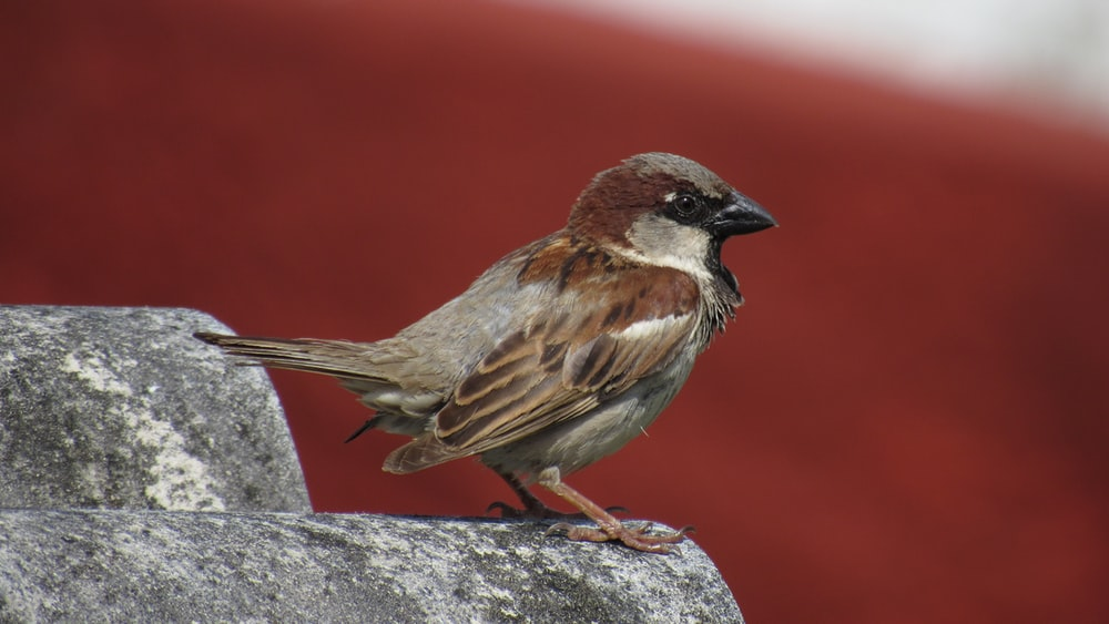 selective focus photography of bird standing on gray rocks