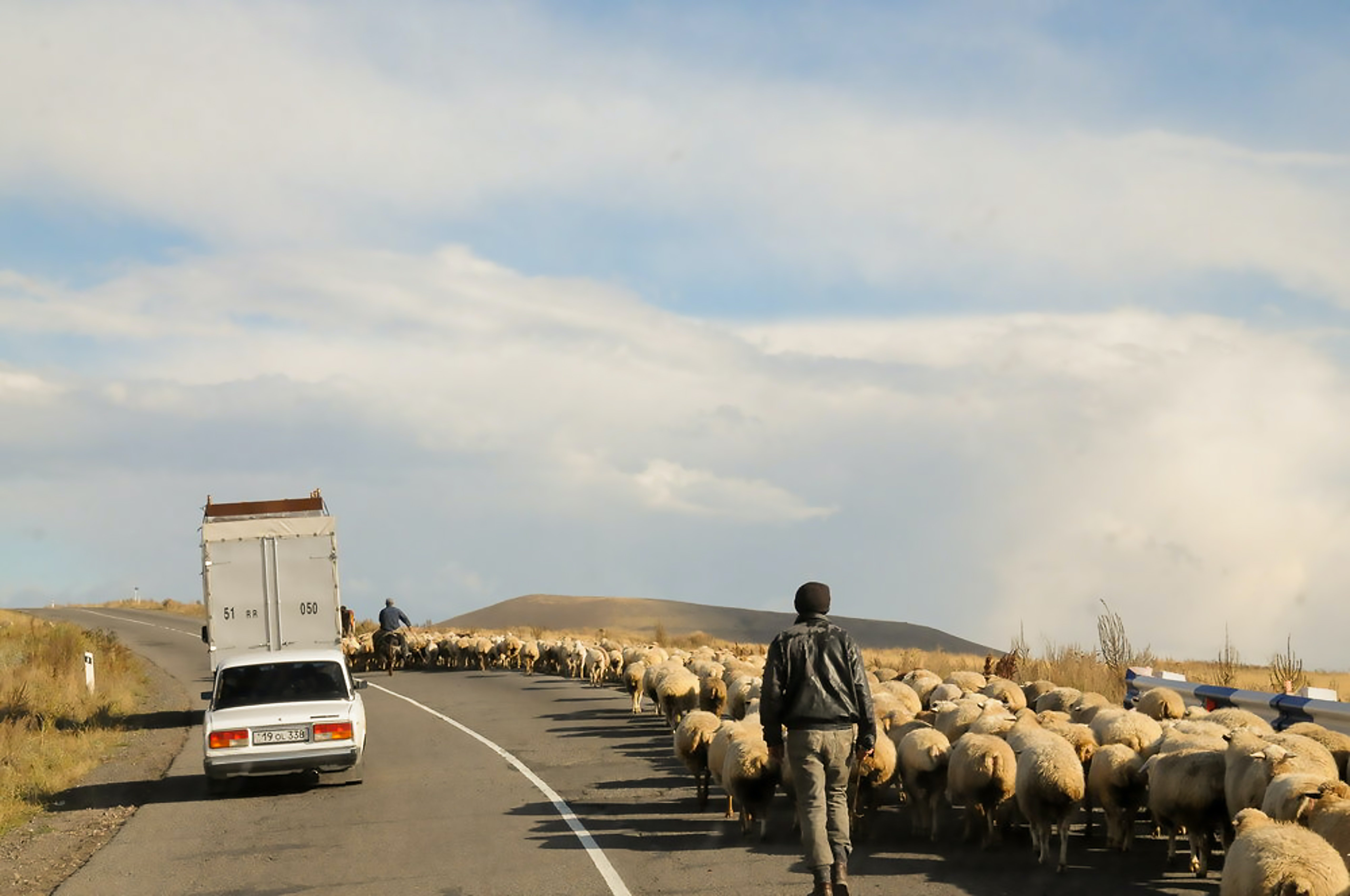 man walking on gray asphalt road with sheep near the white vehicle under the white clouds during daytime