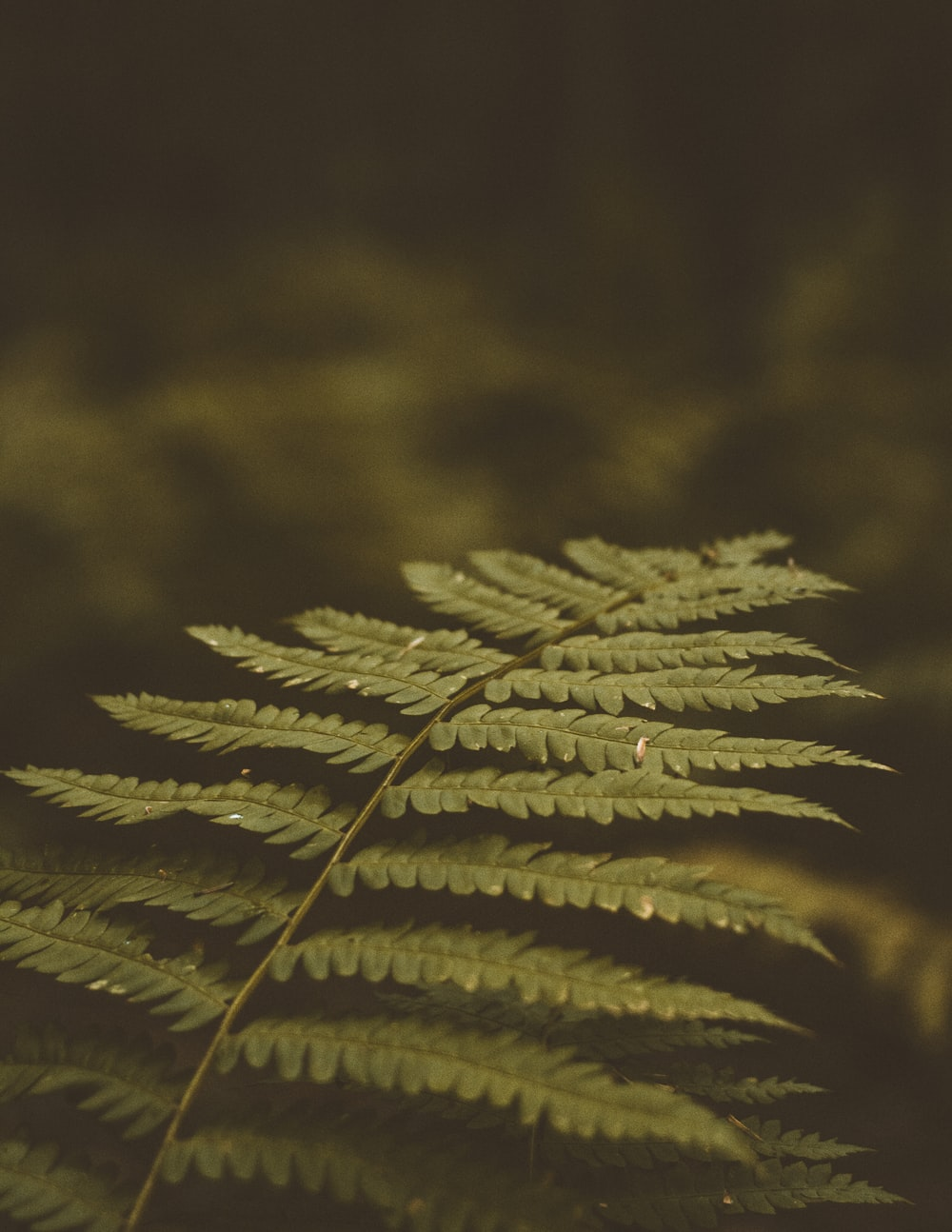 green leafed fern plant selective focus photo