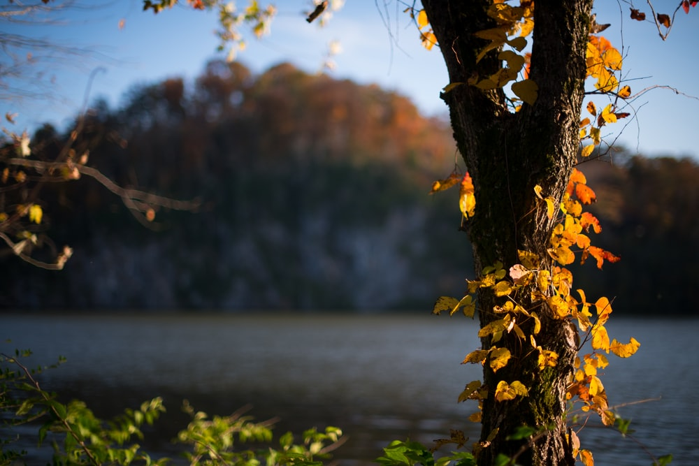 selective focus photo of yellow leaf trees near lake
