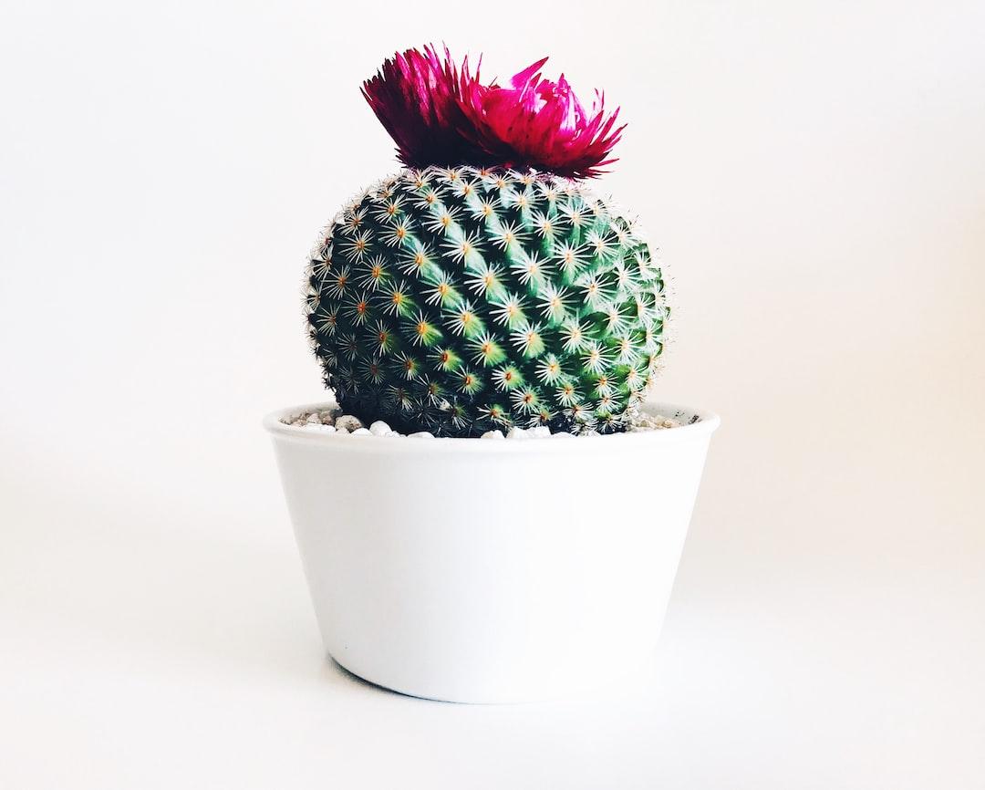 Adele Cactus