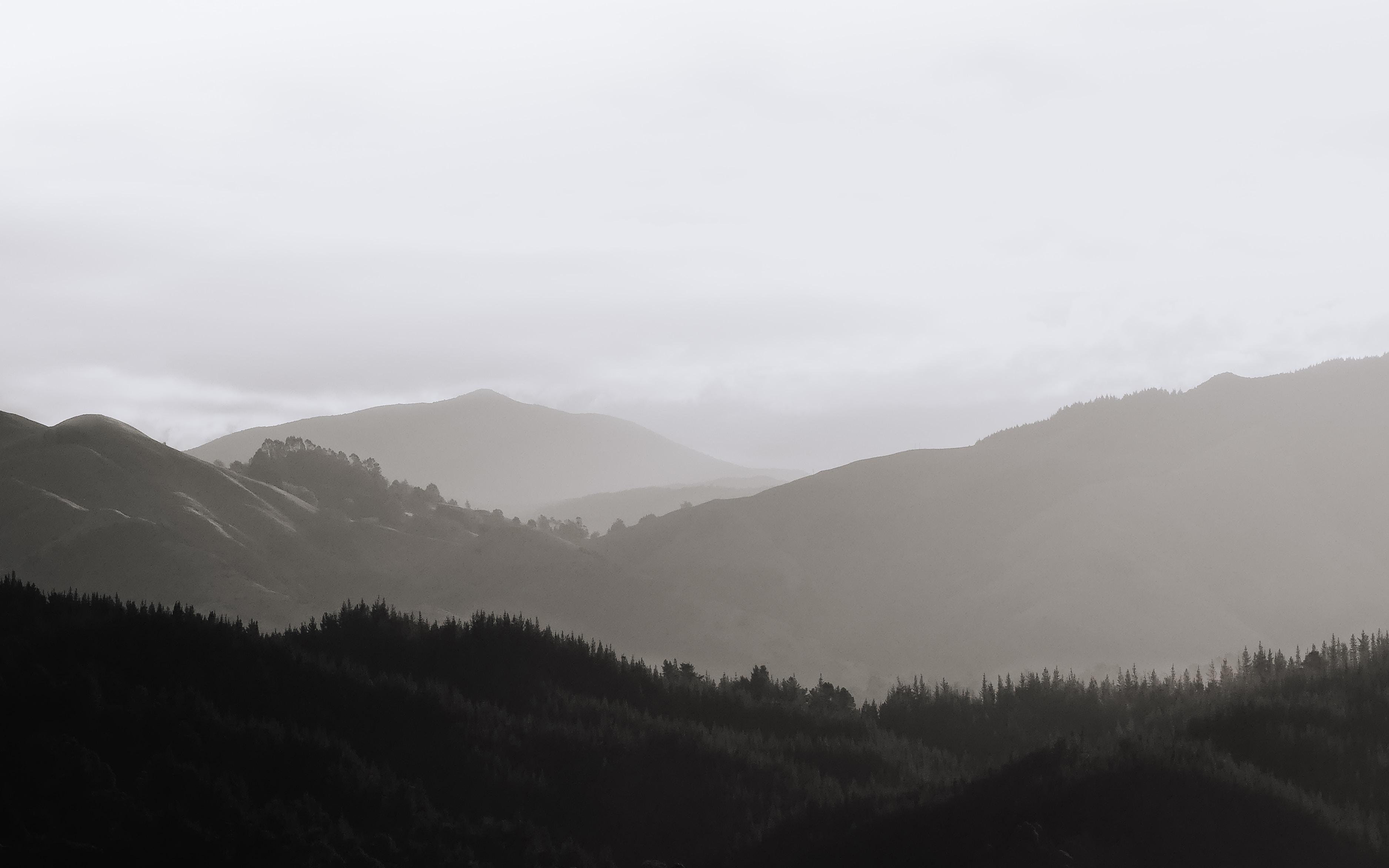 fog beneath a forest
