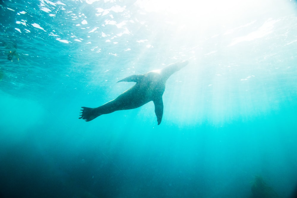underwater photo of seacow