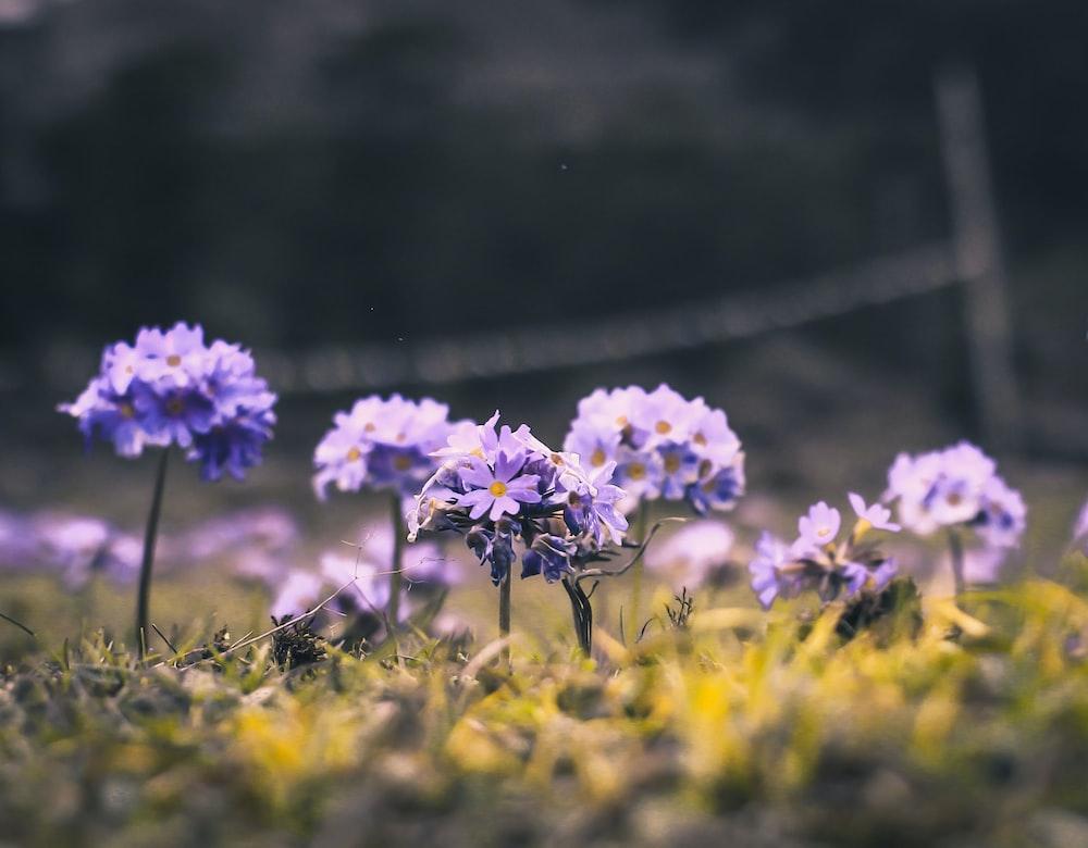 purple flowers in tilt shift lens photography