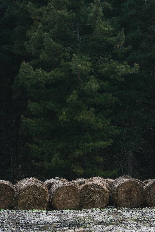 brown haystacks near trees during daytime