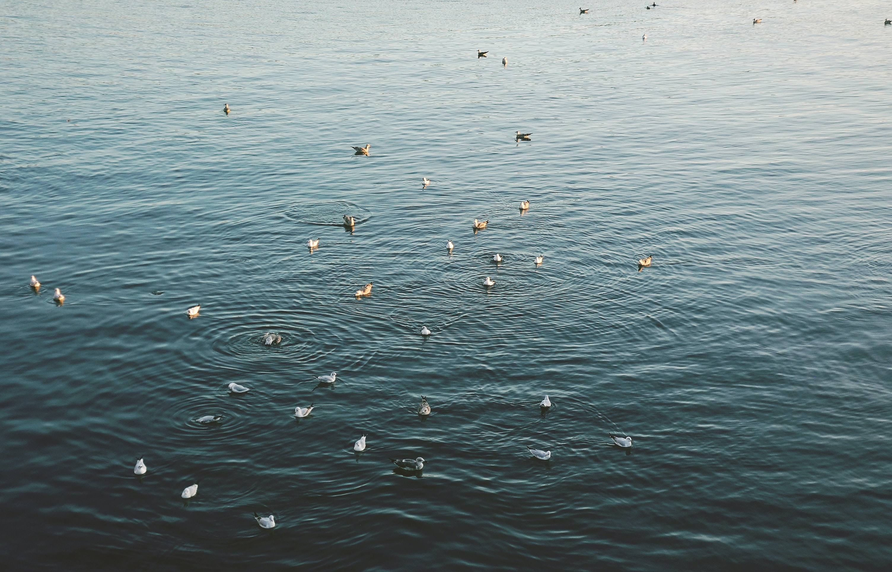 white and gray birds on body of water