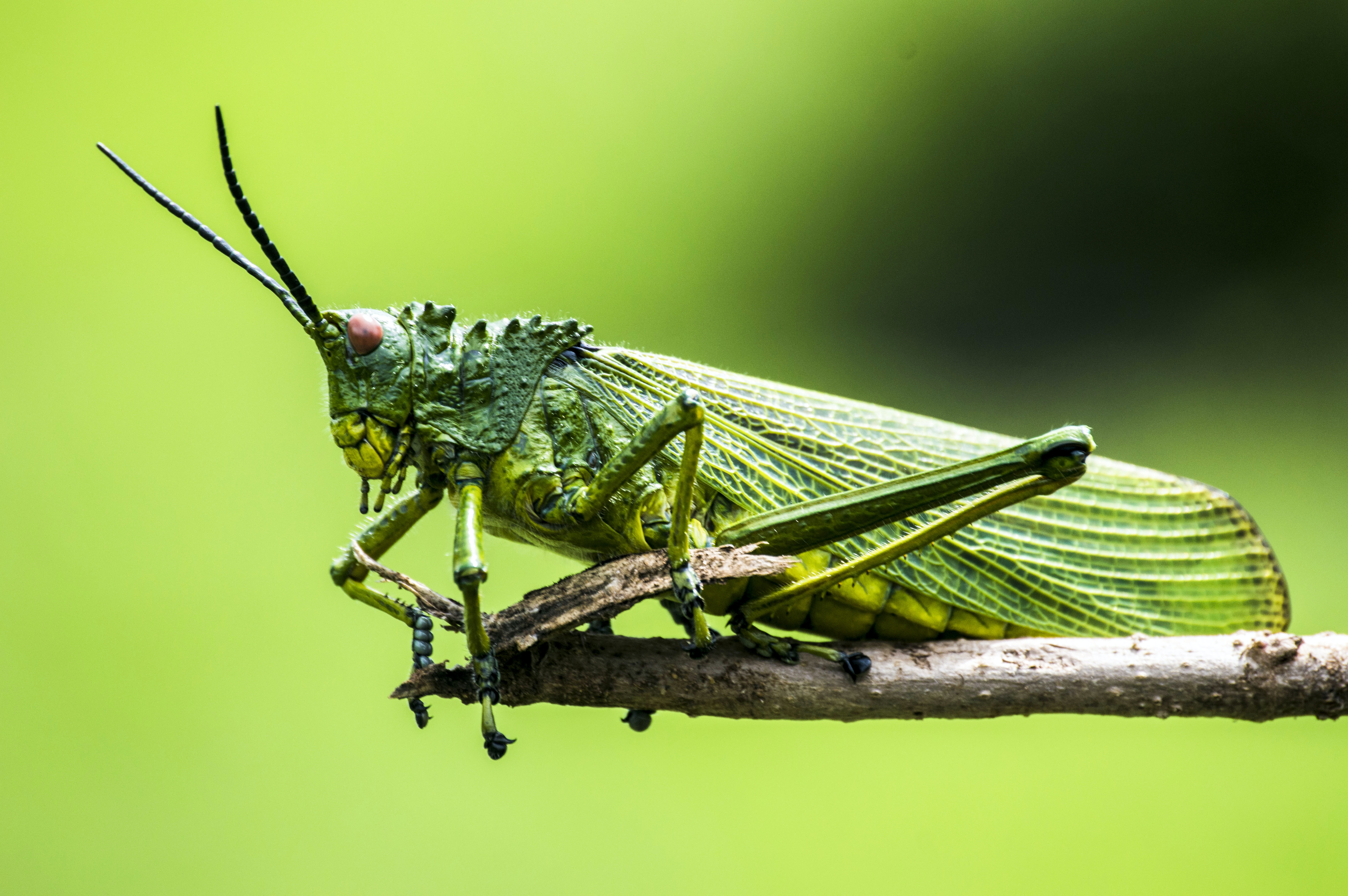 selective focus photography of green insect