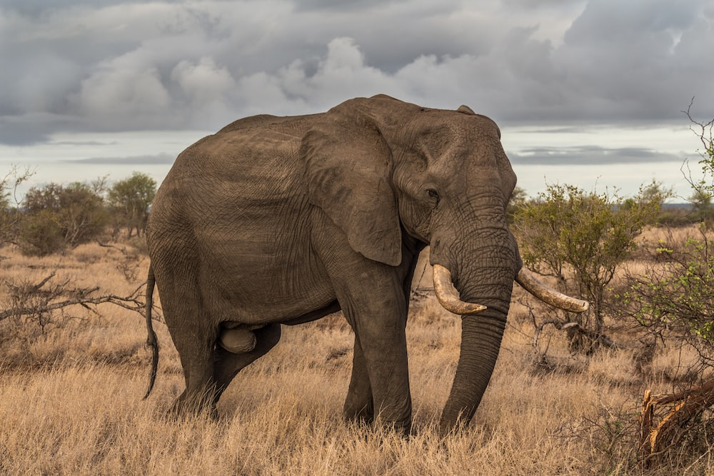 elephant surrounded by grass