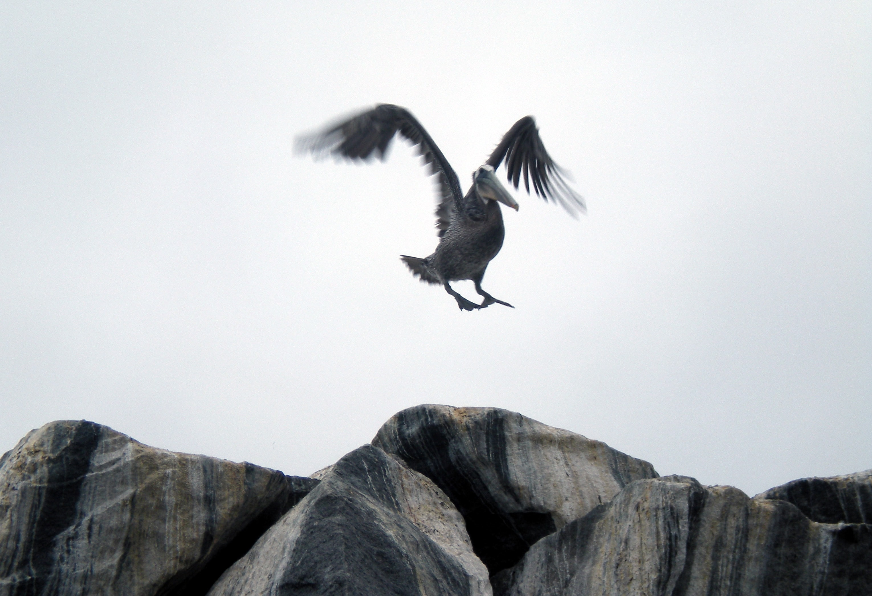 bird flying above rocks