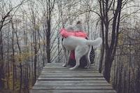person hugging dog on bridge