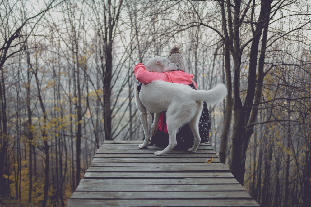 person hugging dog on bridge