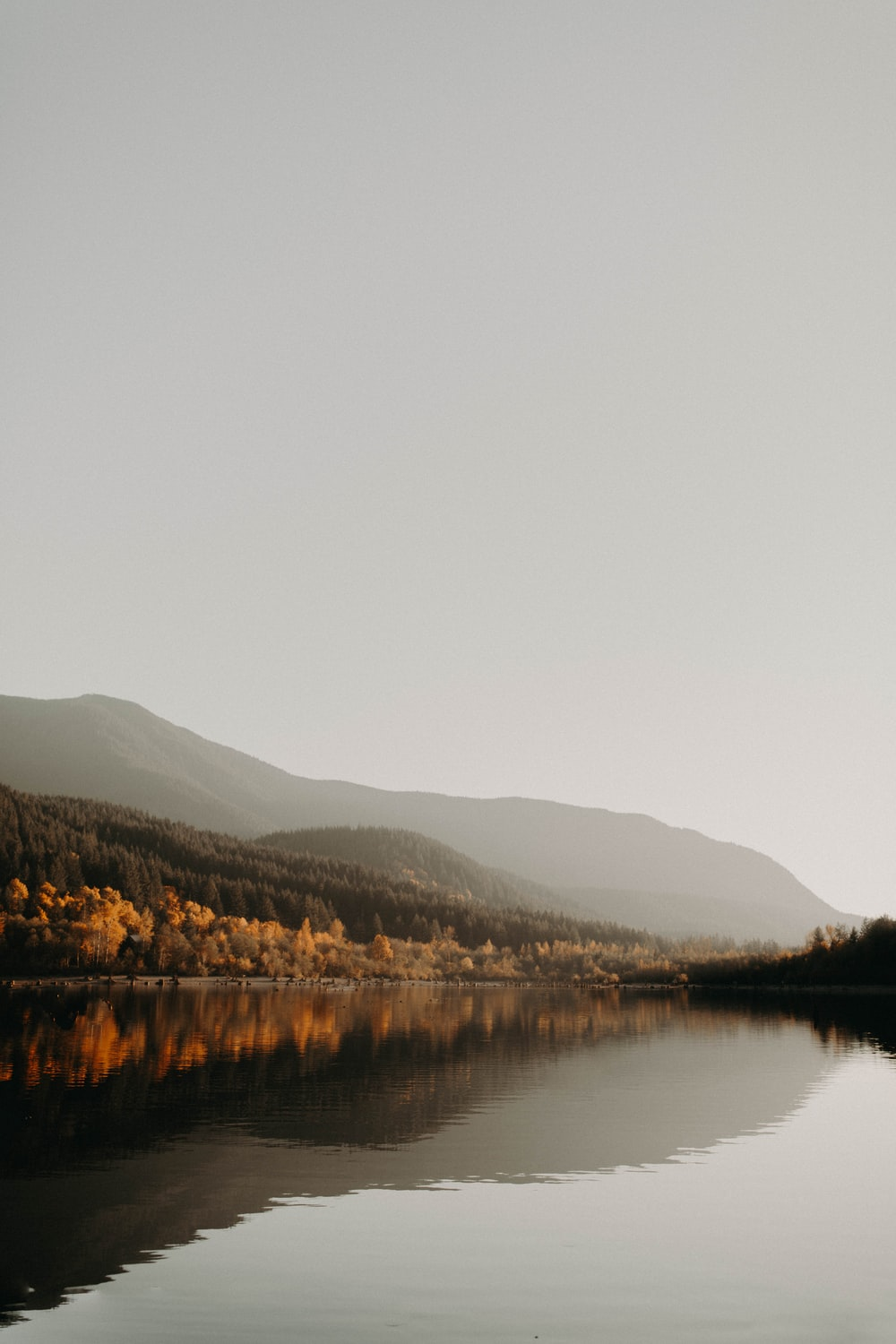 photo of calm body of water near trees