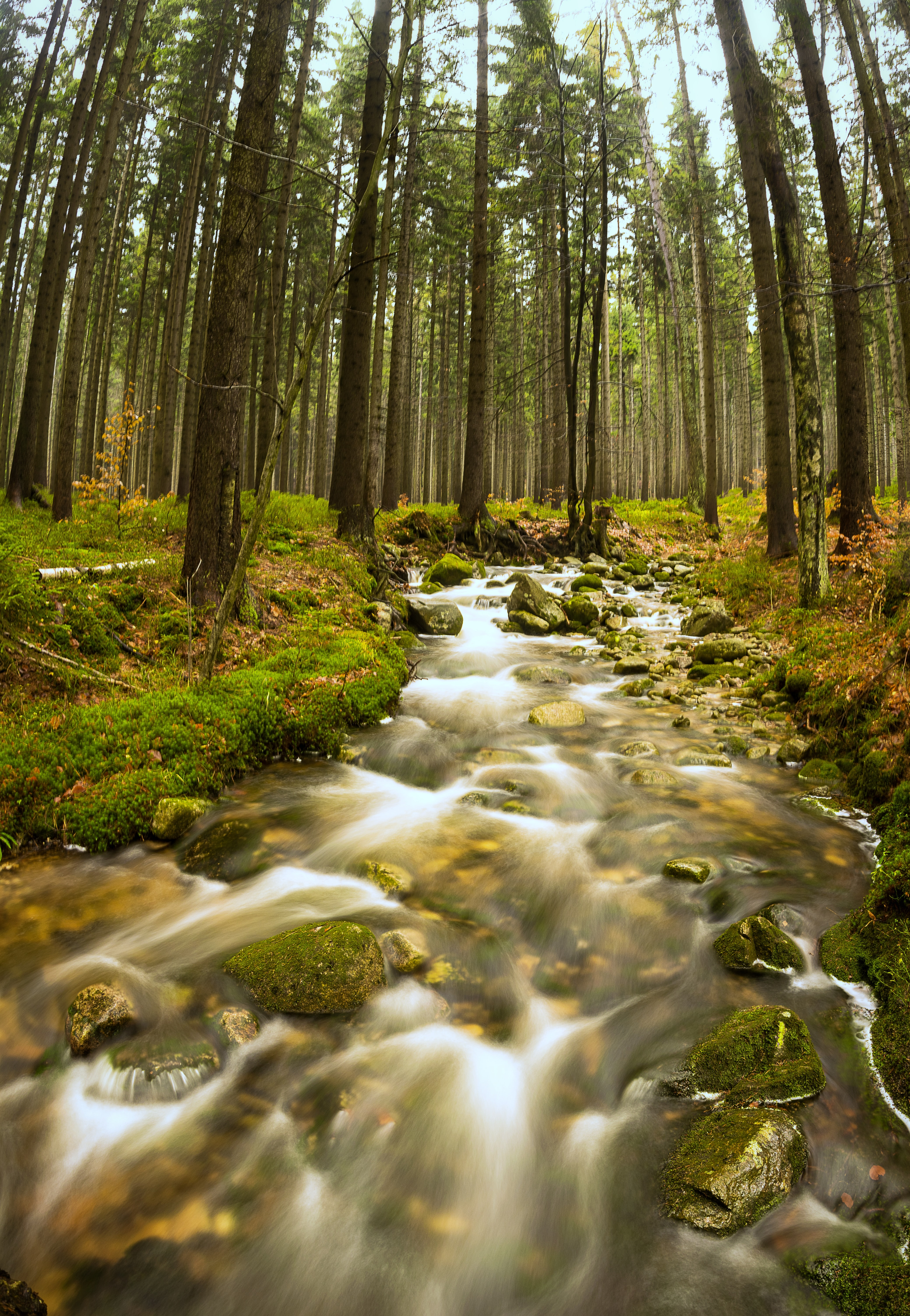 landscape photography of river and green leaf trees
