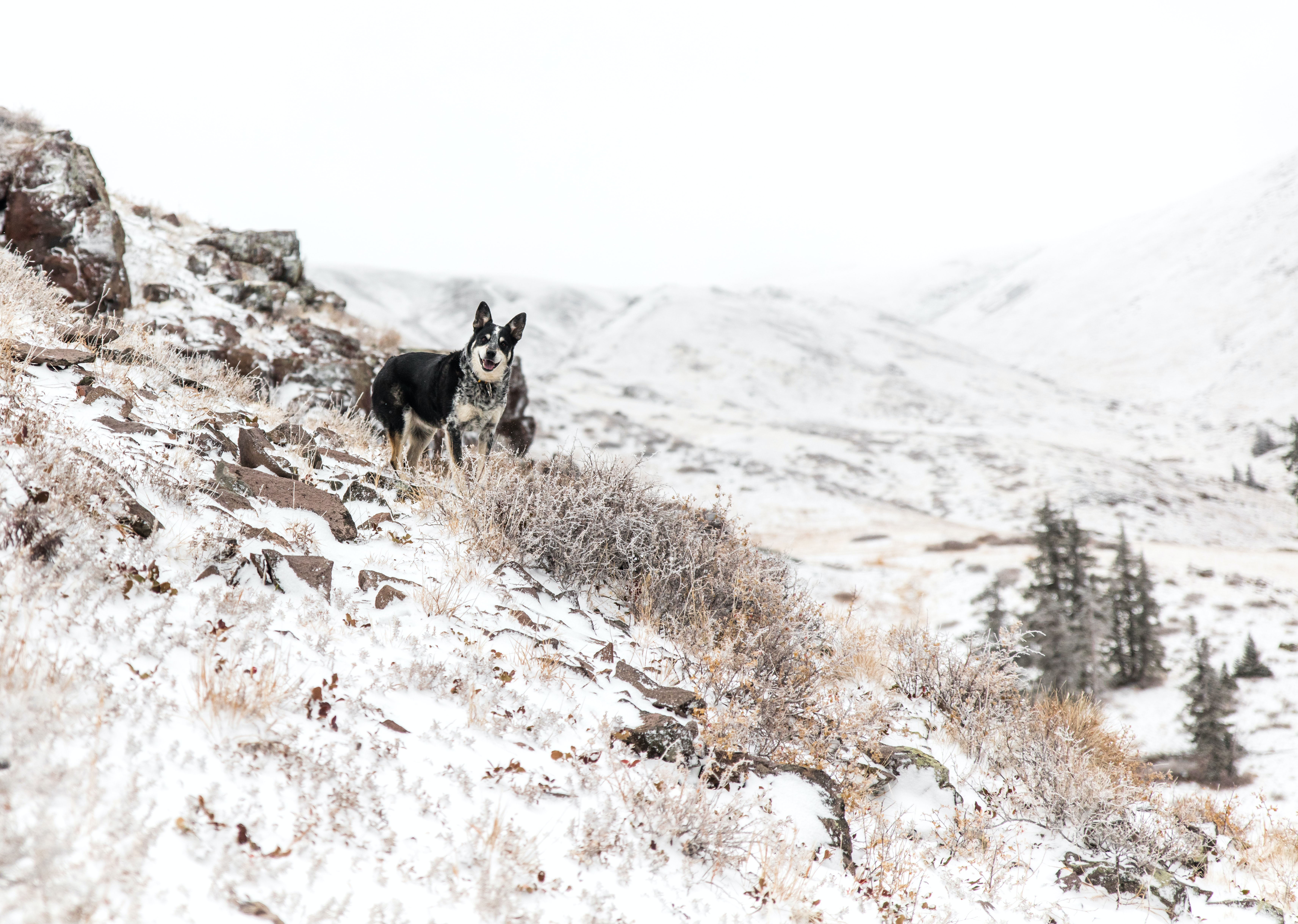 black and white dog standing on the mountain cliff