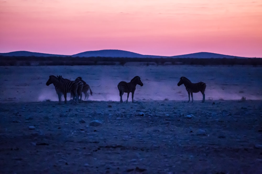 silhouette of four horse standing on sand photo during golden hour