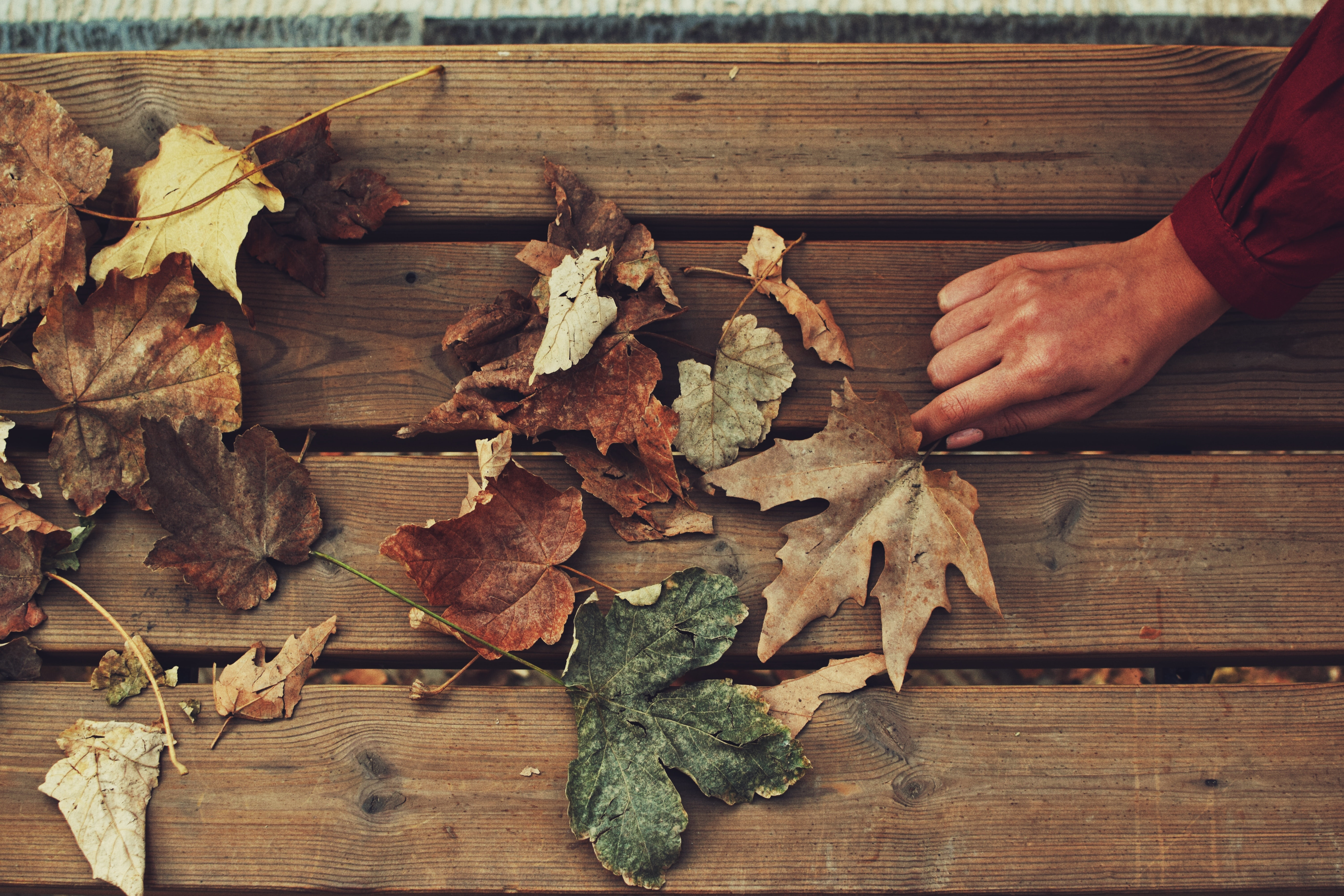 assorted dried leaves on bench